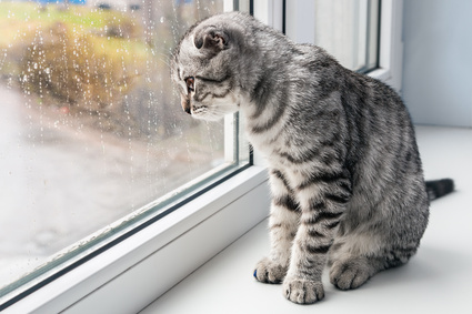 cat sits on a windowsill and looking out the window